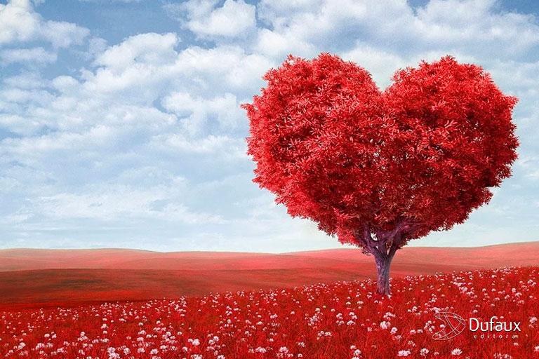 amor cobrindo campo
